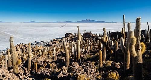 500px-Isla_del_Pescado%2C_Salar_de_Uyuni%2C_Bolivia%2C_2016-02-04%2C_DD_42.JPG