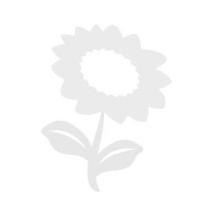 image-default--thumb.305ca150c22262acb4c40de317e93d1a.png